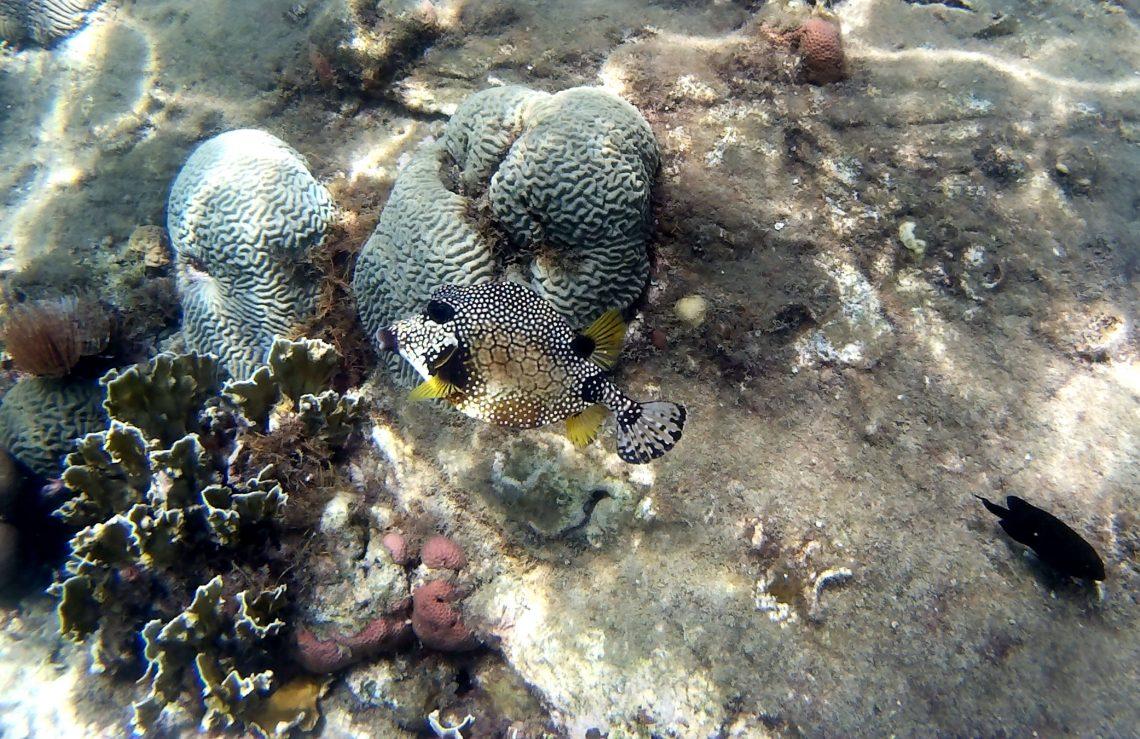 playas de colombia fauna marina