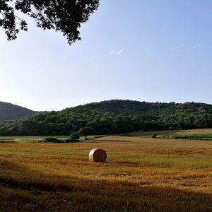 que ver en la toscana italiana paisaje