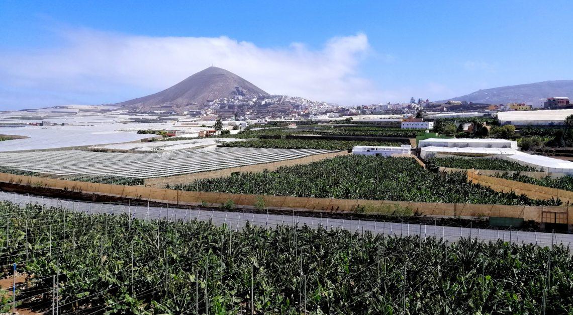 Plantaciones de plátanos Gran Canaria